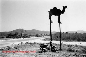 Ibiza. Camel. Moped. Windmills.