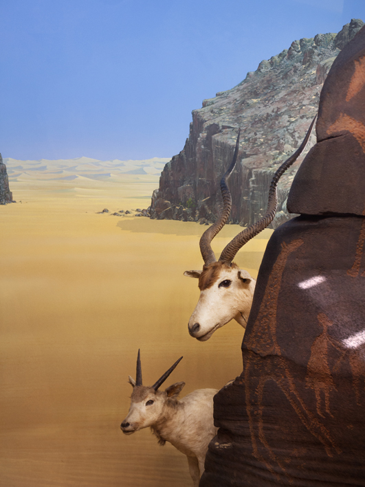 Diorama at the Museum of Natural History, Milan