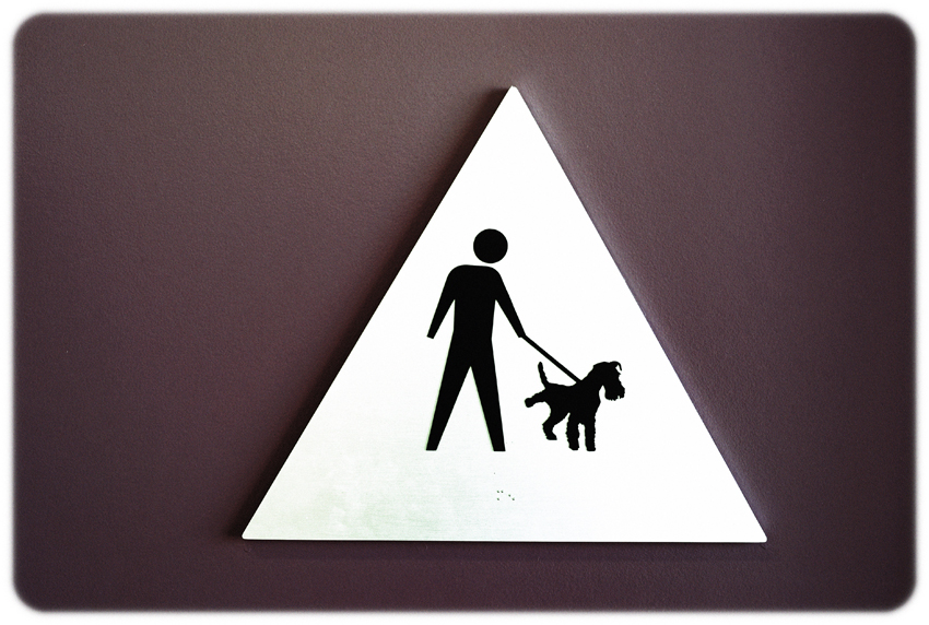 Wag Hotels, suites for cats and dogs å© Nicolo' Minerbi