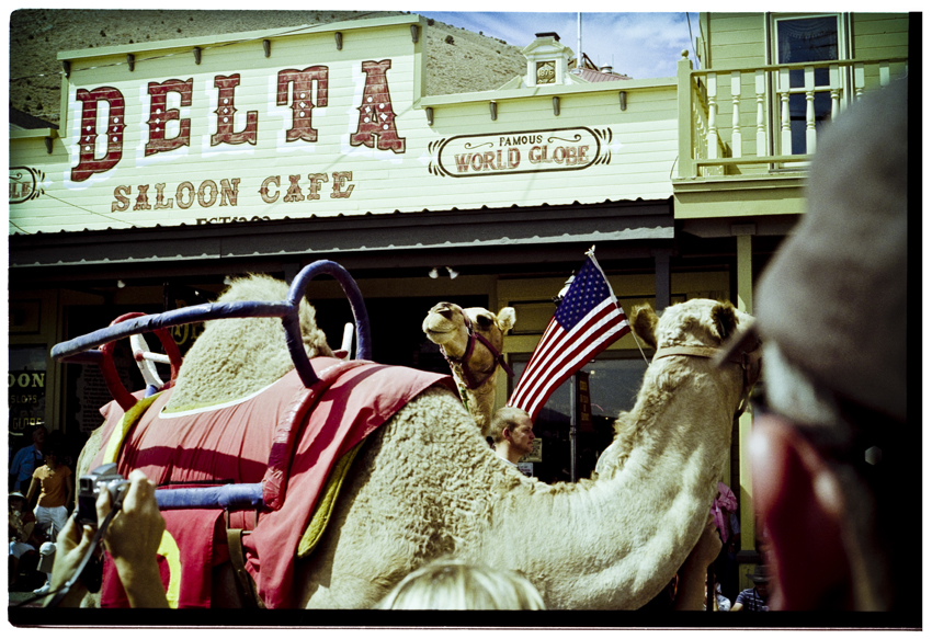 50th Virginia City, Nevada International Camel Races